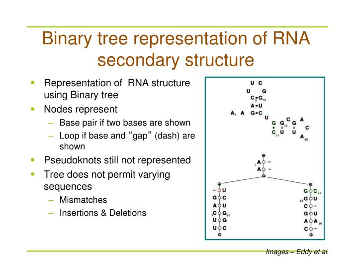 Representation of  RNA structure using Binary tree