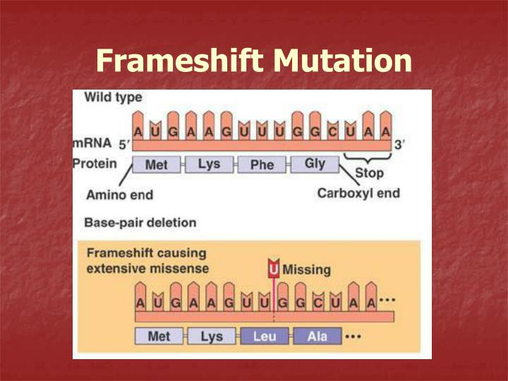 Frameshift Mutation