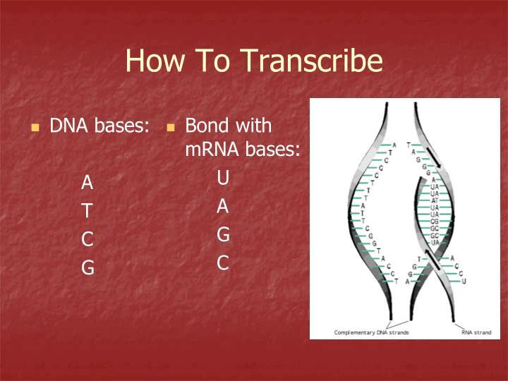 DNA bases: