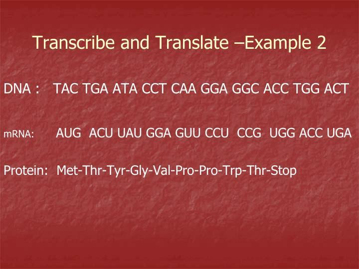 DNA :   TAC TGA ATA CCT CAA GGA GGC ACC TGG ACT