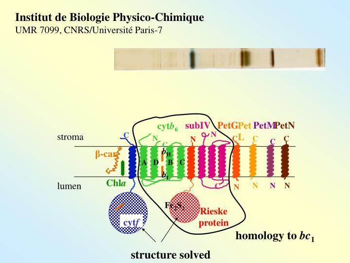 Institut de Biologie Physico-Chimique