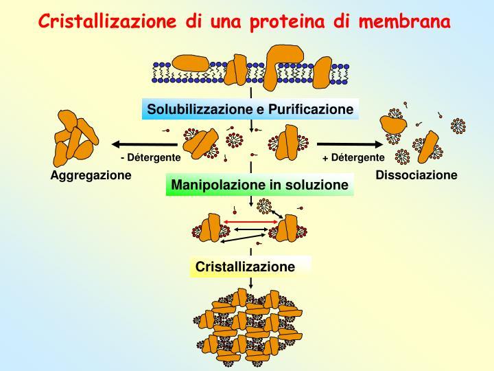 Cristallizazione di una proteina di membrana