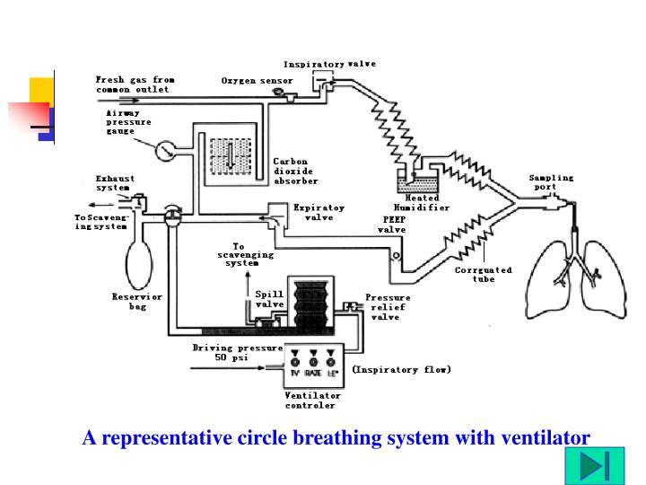 A representative circle breathing system with ventilator