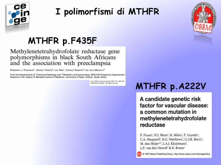 I polimorfismi di MTHFR