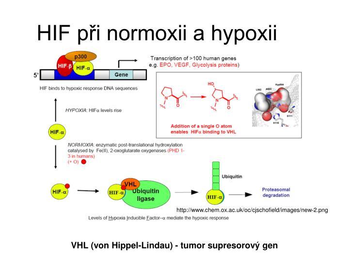 HIF pi normoxii a hypoxii