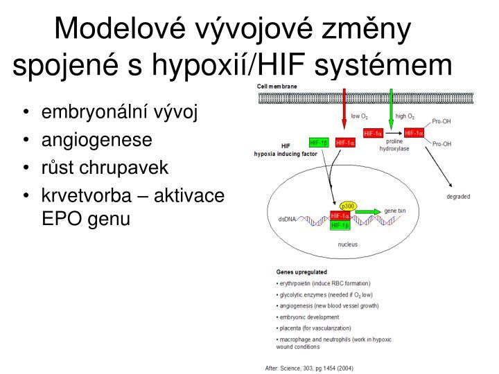 Modelov vvojov zmny spojen s hypoxi/HIF systmem