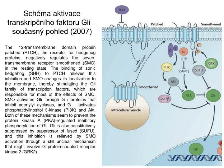 Schma aktivace transkripnho faktoru Gli  souasn pohled (2007)