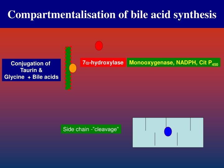 Compartmentalisation of bile acid synthesis