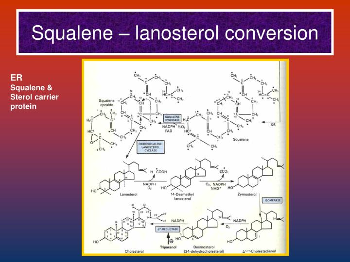 Squalene – lanosterol conversion