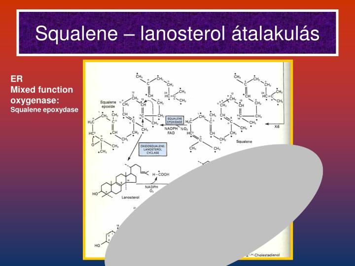 Squalene – lanosterol átalakulás