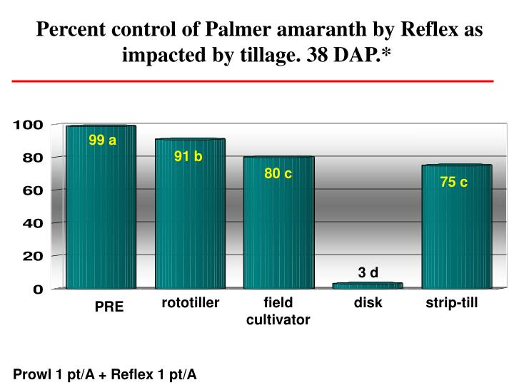 Percent control of Palmer amaranth by Reflex as impacted by tillage. 38 DAP.*