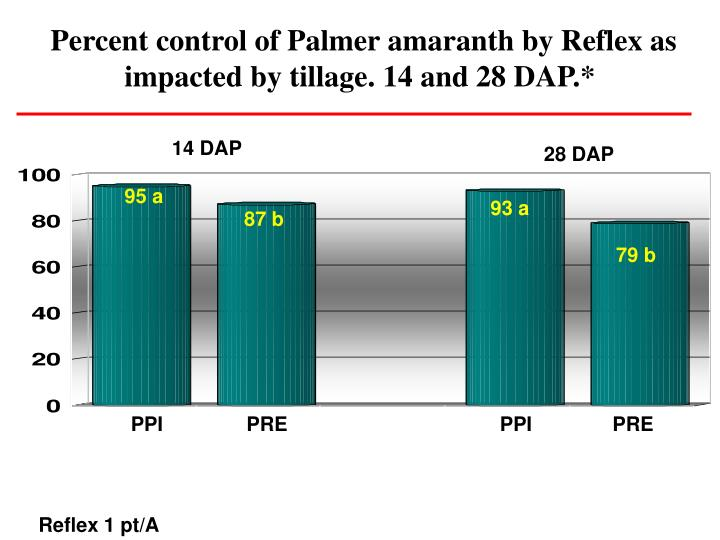 Percent control of Palmer amaranth by Reflex as impacted by tillage. 14 and 28 DAP.*