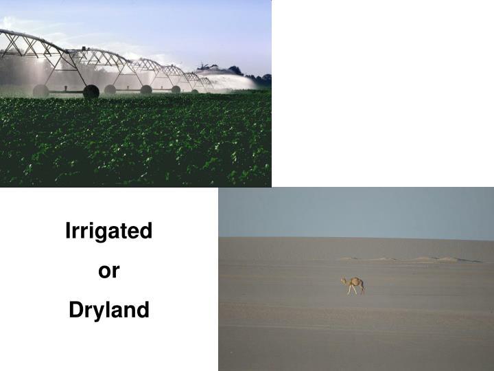 Irrigated