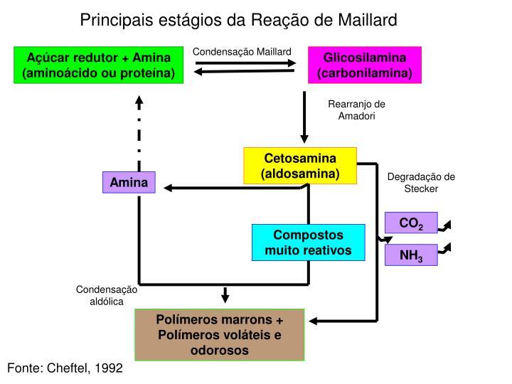 Principais estágios da Reação de Maillard