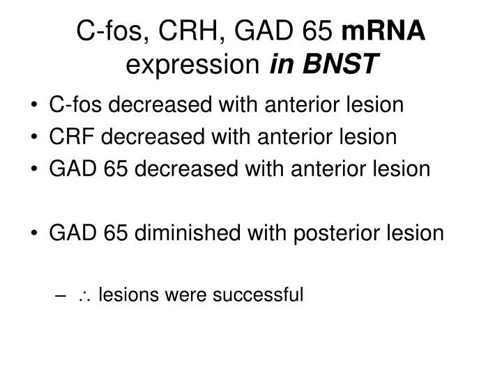 C-fos, CRH, GAD 65