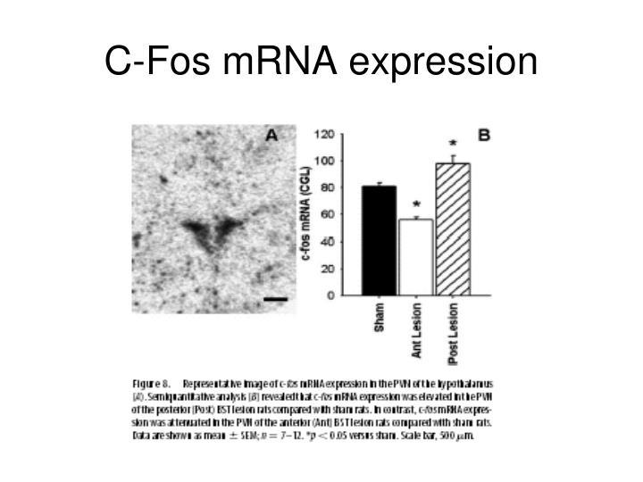 C-Fos mRNA expression