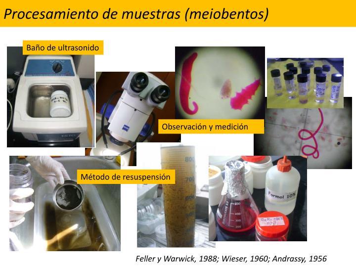 Procesamiento de muestras (meiobentos)
