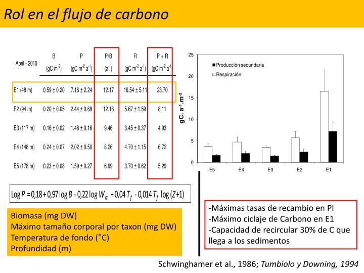 Rol en el flujo de carbono