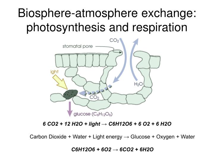 Biosphere-atmosphere exchange: