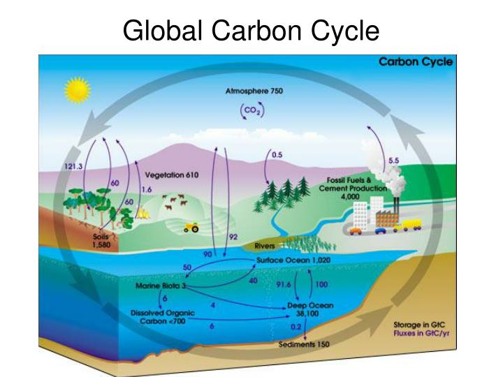 Global carbon cycle