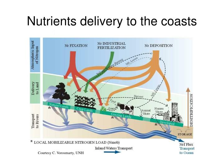 Nutrients delivery to the coasts