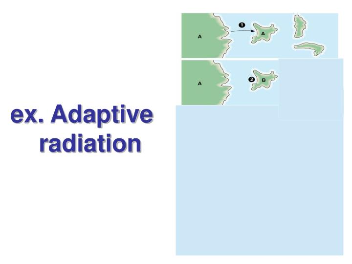 ex. Adaptive      radiation