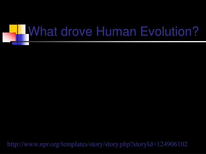 What drove Human Evolution?