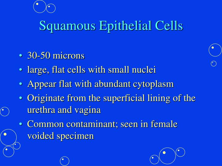 Squamous Epithelial Cells