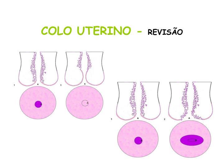 COLO UTERINO -