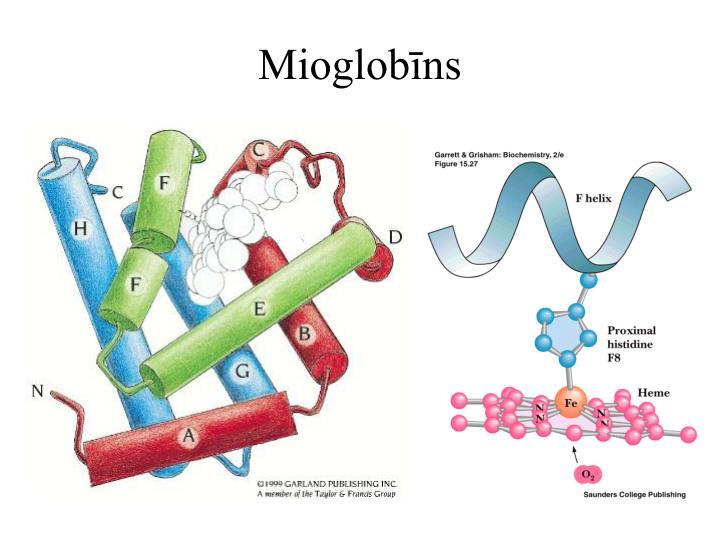 Mioglobīns