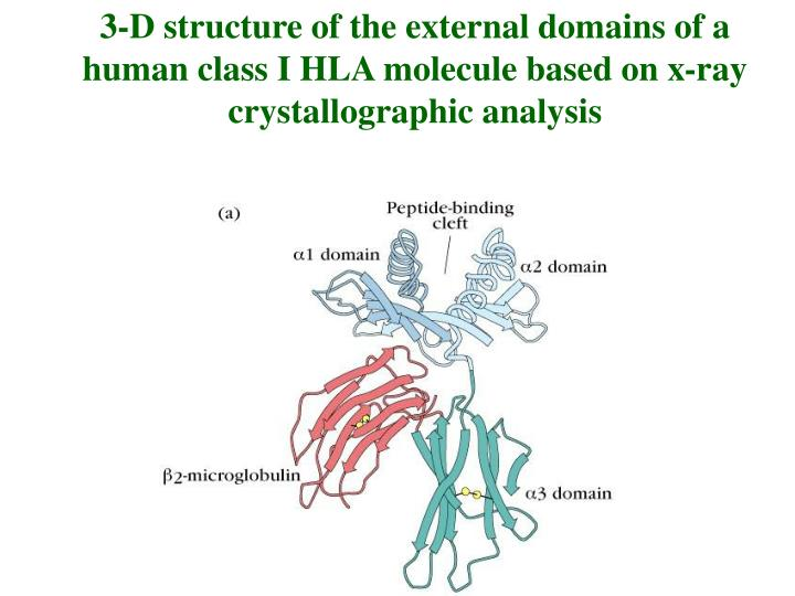 3-D structure of the external domains of a human class I HLA molecule based on x-ray crystallographic analysis