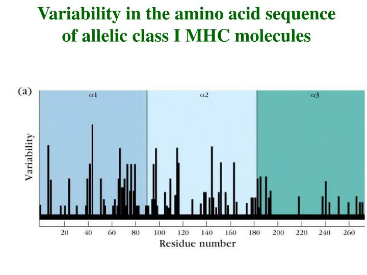 Variability in the amino acid sequence