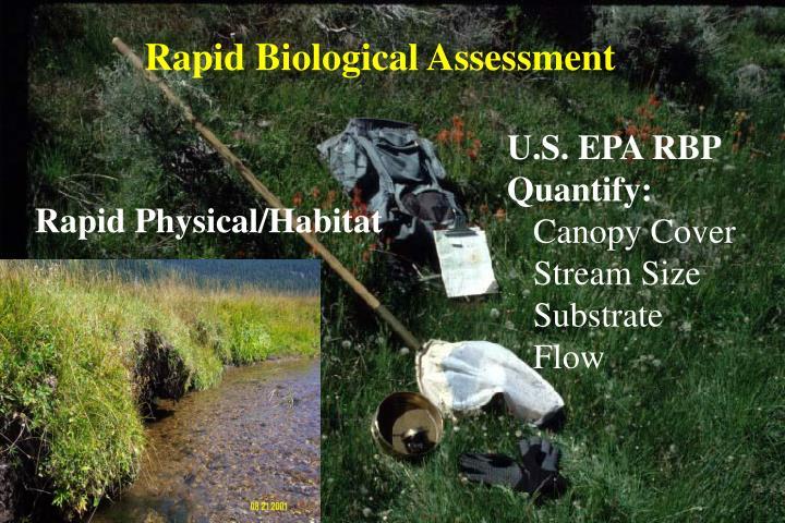 Rapid Biological Assessment