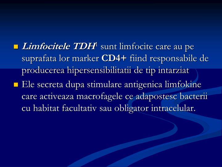 Limfocitele T