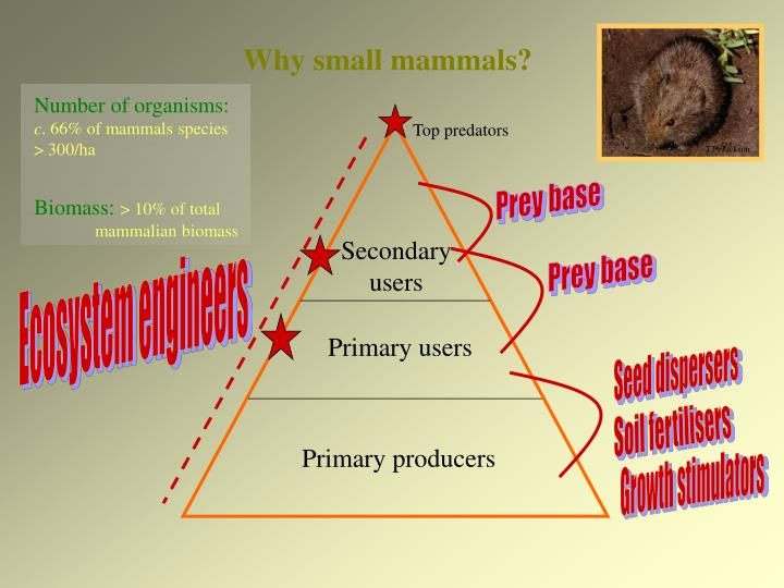 Why small mammals?