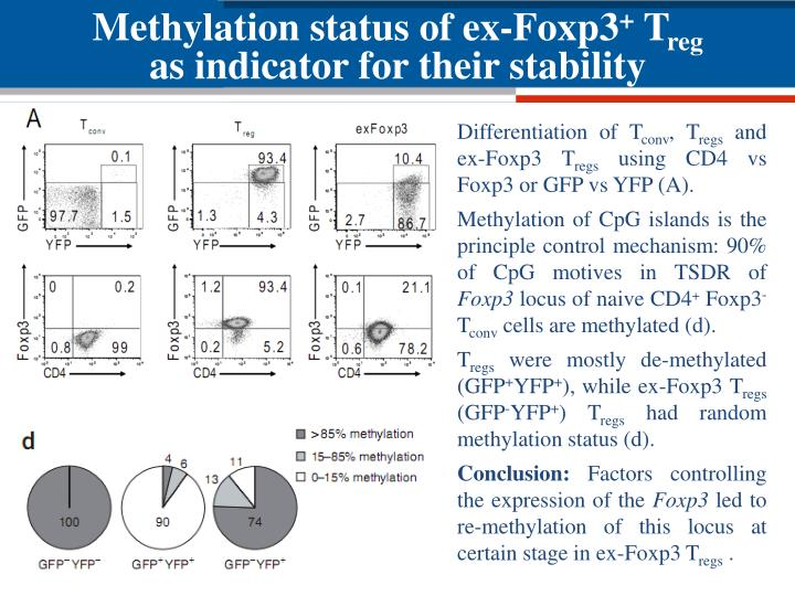Methylation status of ex-Foxp3