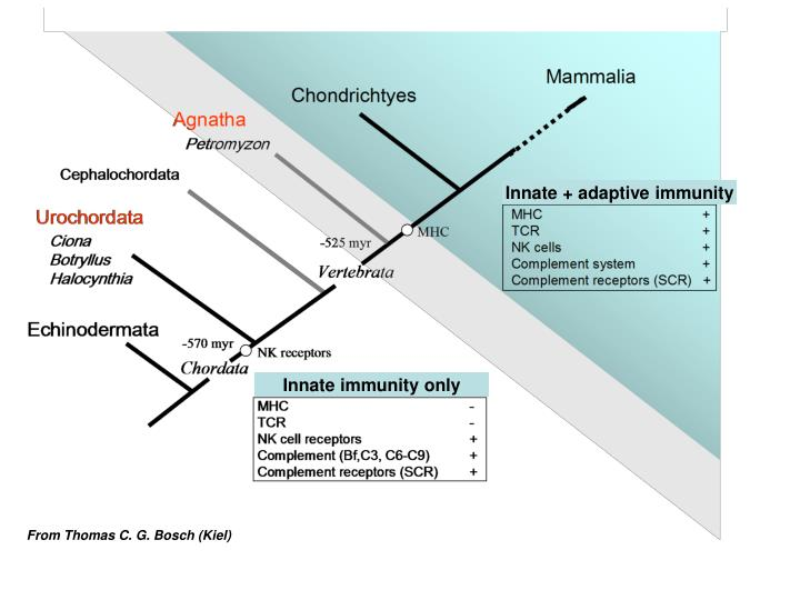 Innate + adaptive immunity