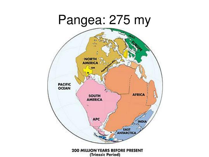 Pangea: 275 my