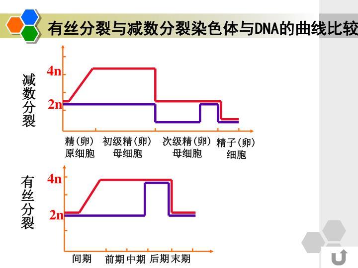 有丝分裂与减数分裂染色体与