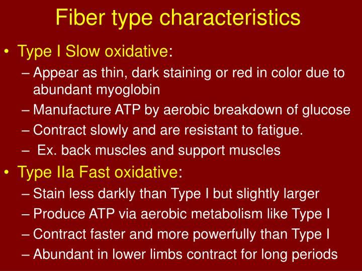 Fiber type characteristics