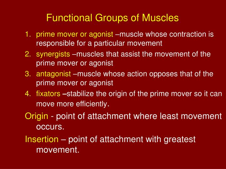 Functional Groups of Muscles