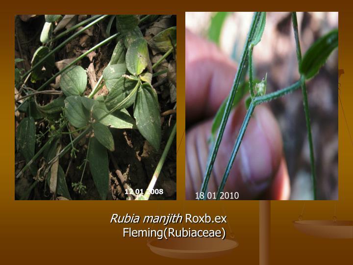 Rubia manjith