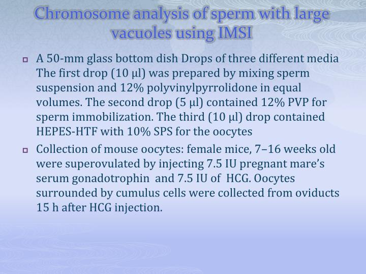 Chromosome analysis of sperm with large