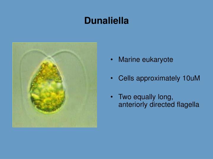 Dunaliella