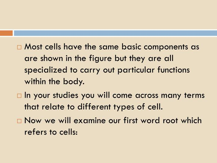 Most cells have the same basic components as are shown in the figure but they are all specialized to carry out particular functions within the body.