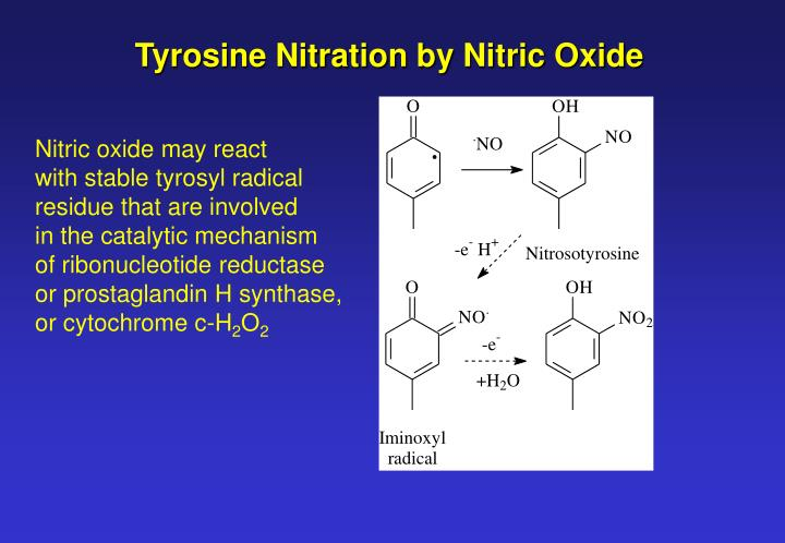 Tyrosine Nitration by Nitric Oxide