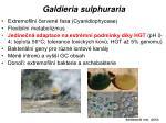 galdieria sulphuraria