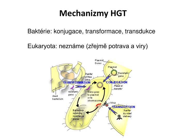 Mechanizmy HGT
