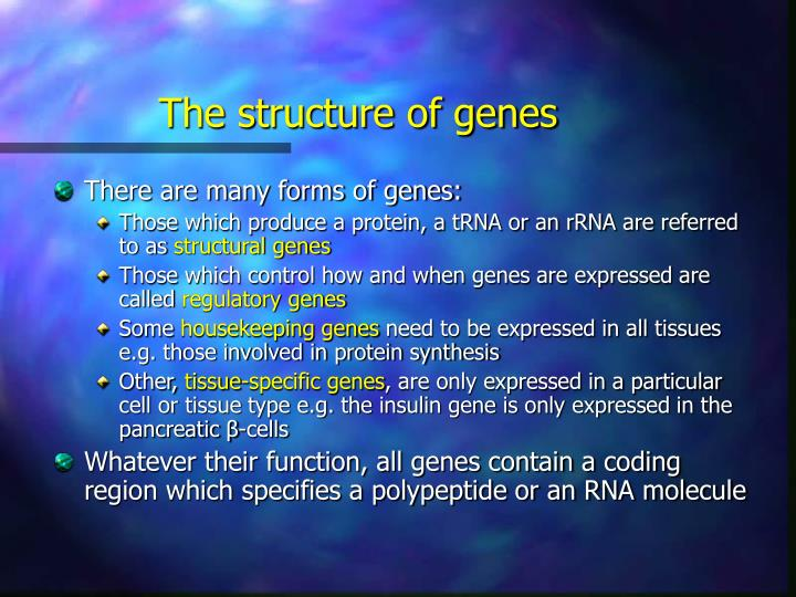 The structure of genes