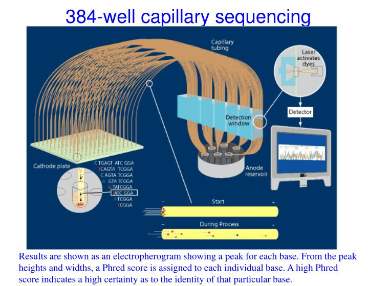 384-well capillary sequencing